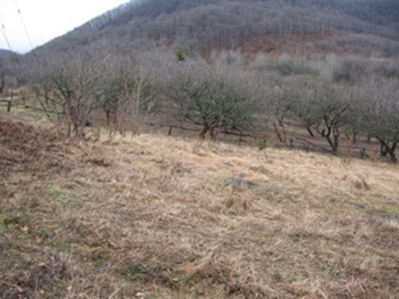 for sale land  Starikuty